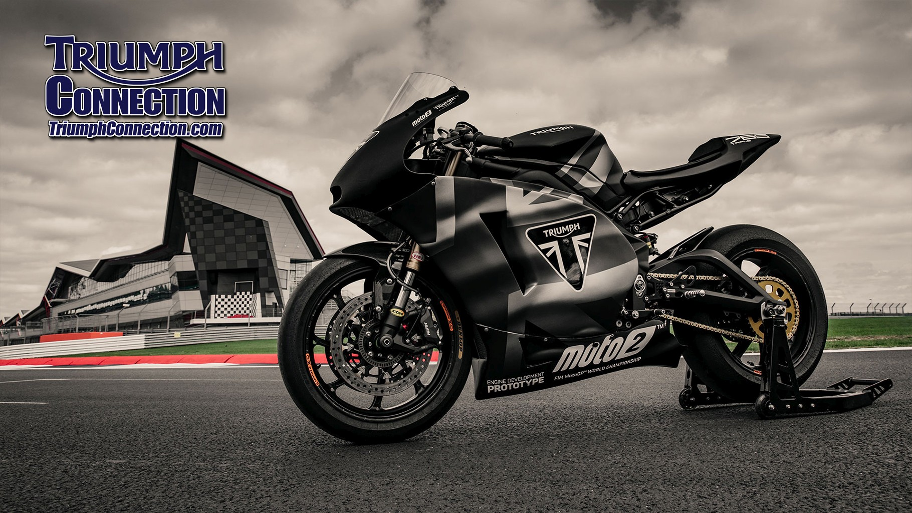 Triumph Motorcycles Stella Tee Ladies Black Tiger T-Shirt NEW MTSS19E29